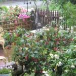Jane_Austen_Garden_Spring2010